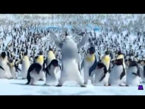 The Penguin Song   Happy Birthday