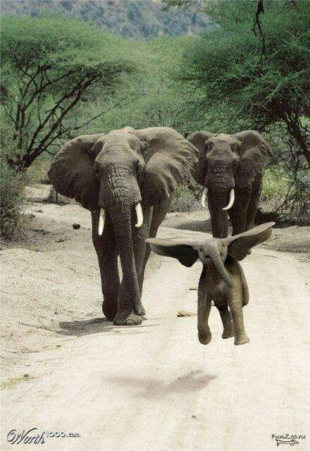 DUMBO.....Look he's trying to fly!