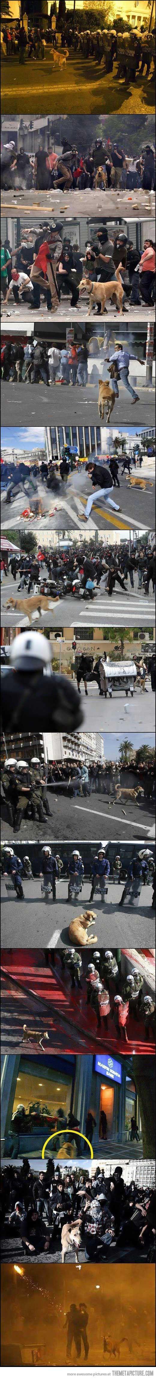 Riot dog…