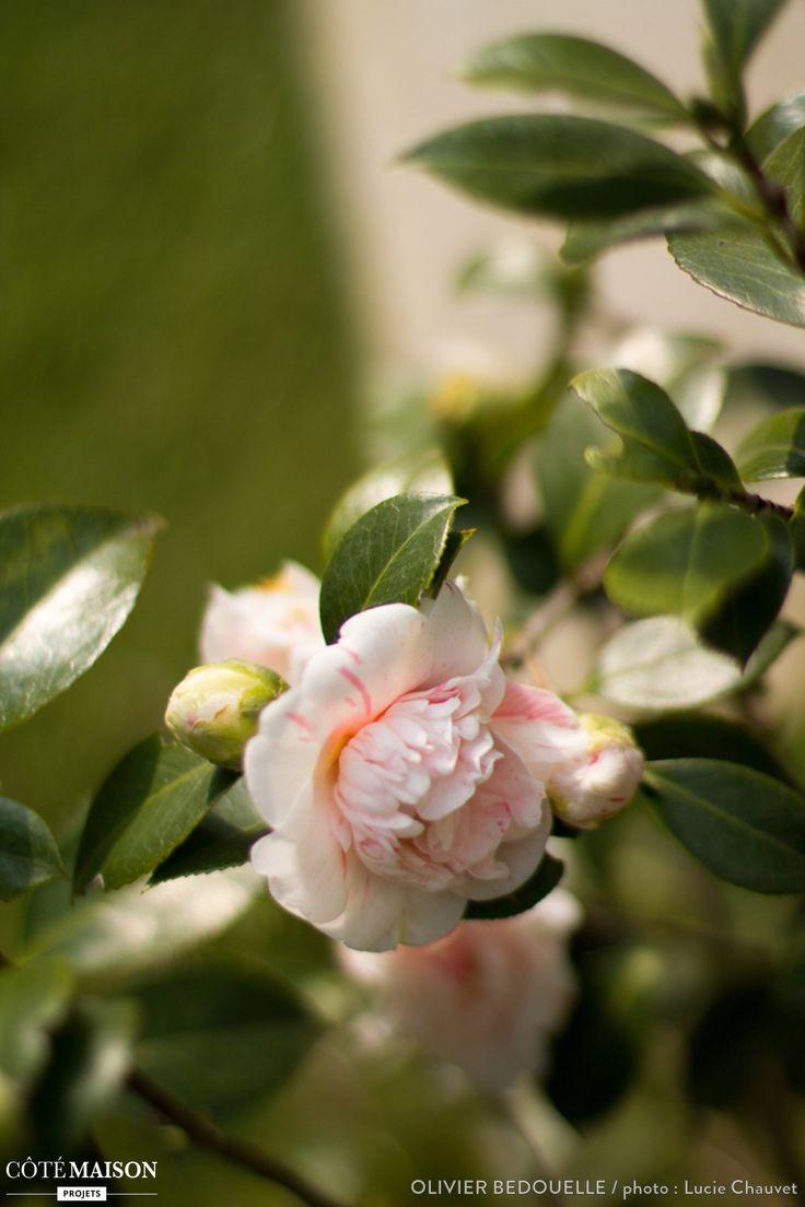 Des fleurs blanches et roses dans un jardin 1001 for Un jardin de fleurs