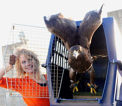 It's so exciting when the eagle flies over Jordan Hare. There's no other tradition quite like this one. ~ Check this out too ~ RollTideWarEagle.com sports stories that inform and entertain and Train Deck to learn the rules of the game you love. #Collegefootball Let us know what you think. #Auburn #WarEagle
