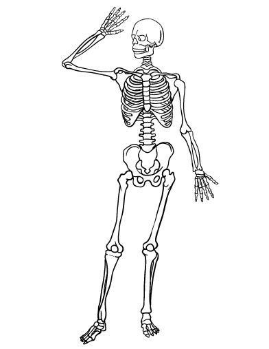 Printable skeleton coloring page. Free PDF download at