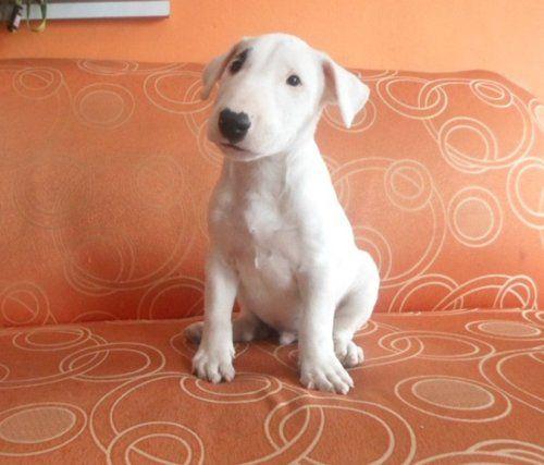 Venta, comrpa y adopción de mascotas en Colombia : http://onvenia.com.co  Compra, vende o adopta tu mascota con los anuncios clasificados gratis de Onvenia | onvenia