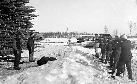 Red rebels are being executed in Varkaus during the insurrection in Finland in 1918. Kuva Varkaudessa tapahtuneesta joukkoteloituksesta on vuosikymmenien myötä muuttunut sisällissodan symboliksi. Valkoisten kenttäoikeus tuomitsi lähes 200 punaista ammuttaviksi välittömästi heidän antautumisensa jälkeen.