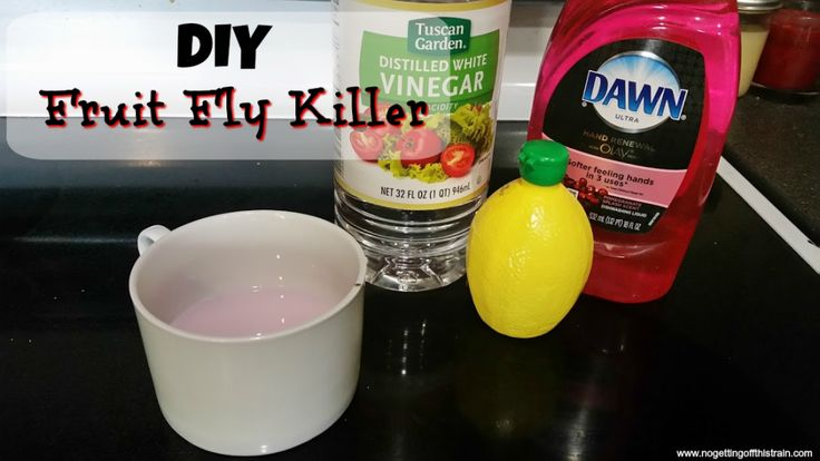 Summertime means pesky fruit flies! Here's a DIY fruit fly killer that will get rid of those pests within hours. www.nogettingoffthistrain.com