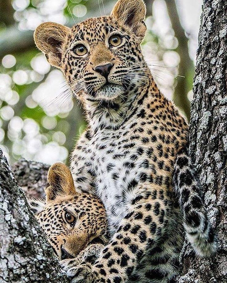 "10.8k Likes, 28 Comments - Animals - Wildlife (@wildlifeowners) on Instagram: ""Photo via :  ayustar  #wildlifeowners"""