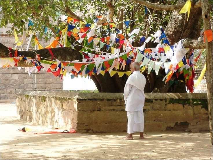 <Güneydoğu Asya topraklarında da, örneğin Tayland'daki Wat Phra Kaeo Tapınağı'nda, en azından bir tane Bodhi ağacı vardır. Bodhi ağacı, nisan ya da mayıs ayında dolunay sırasında Vesak Bayramı için bir odak noktası olarak görülmektedir.