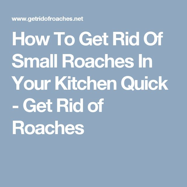 17 best ideas about german cockroach on pinterest roach remedies how to kill mosquitoes and. Black Bedroom Furniture Sets. Home Design Ideas