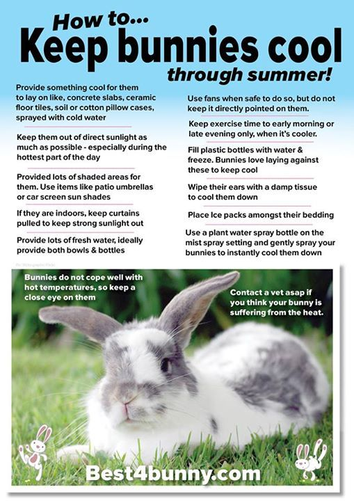 Keeping bunnies cool... Find more helpful tips here http://best4bunny.com/keep-rabbits-cool-summer-simple-top-tips/ Best4bunny