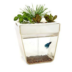 Aquafarm: Aquaponics Fish Garden | ThinkGeek