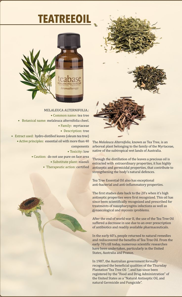 Tea Tree Oil - Relaxing Haircare #essentialoil #wellness #scalptreatment