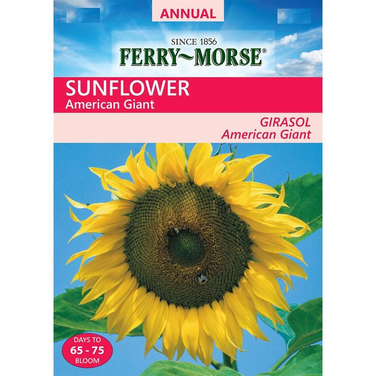 Ferry Morse Sunflower American Giant Seed In 2020 American Giant Giant Sunflower Seeds Giant Sunflower