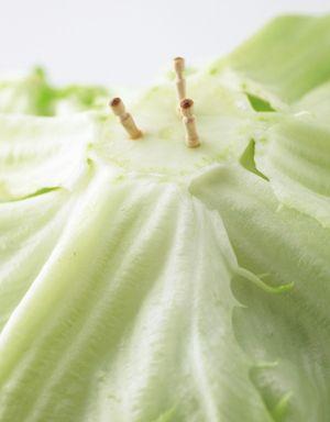 【野菜保存テク】○○を使えば、レタスが3週間パリッと保存できる!【オレンジページnet】プロに教わる簡単おいしい献立レシピ