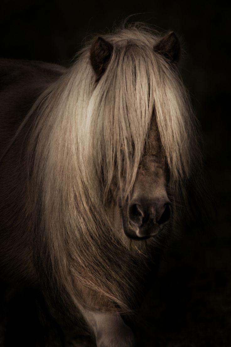 Shetland Pony <3 by Asena & Kosh Wolf
