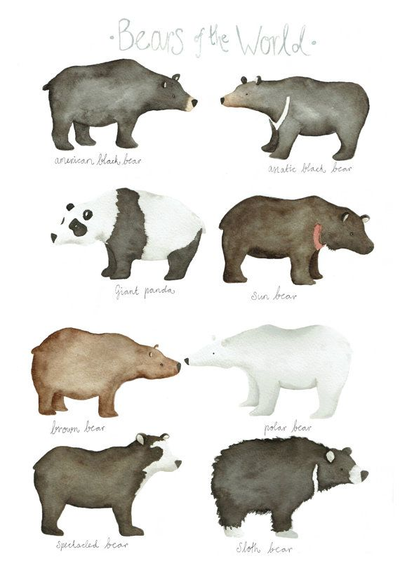 Bears Of The World Limited Edition Giclee Print By Linamakes Brown Bear Illustration Bear Illustration