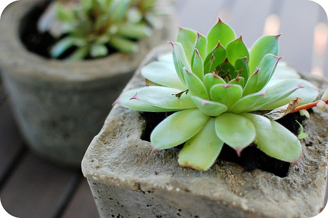 This do-it-yourself modern pot (hyperytufa) project with cute little succulents have my name all over them