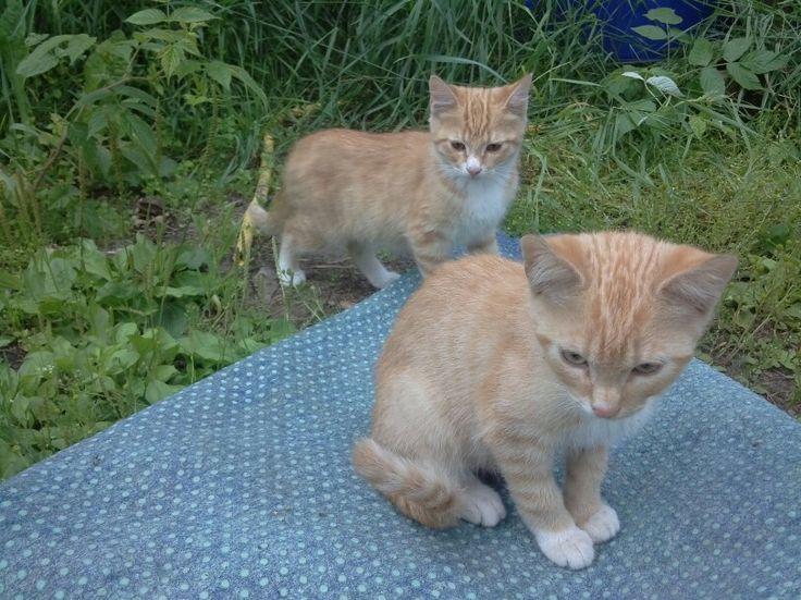 Kissat 2 ja 3
