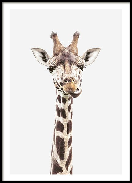 The cutuest giraffe picture! A great holiday present