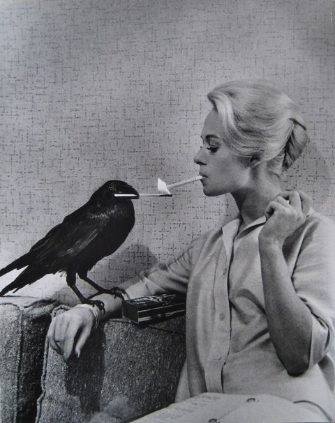 Tippi Hedren and raven between takes of The Birds.....