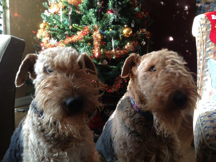Waiting for a treat from Santa