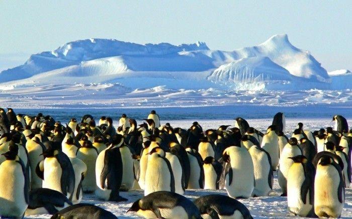 die pinguine auf der antarktis reisen sehen