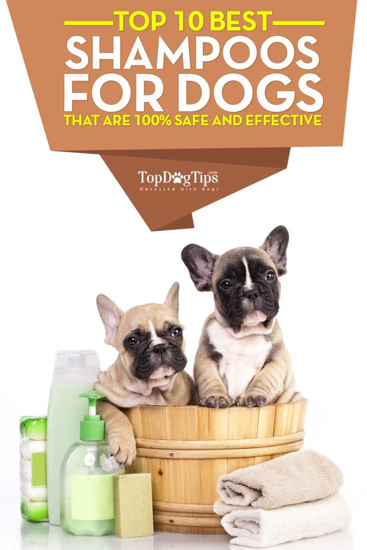 Best Dog Shampoo: HUGE Review of Top 10 Shampoos for Dogs. There's no giving a dog a bath without using a shampoo for dogs. You need the best dog shampoo that is specifically made for canines, and that's also affordable for pet owners. Today, there are hundreds of different dog shampoo formulas: for dogs with allergies, different coat types and even medicated dog shampoos that will help to heal hot spots and other skin conditions. #dogs #doggrooming