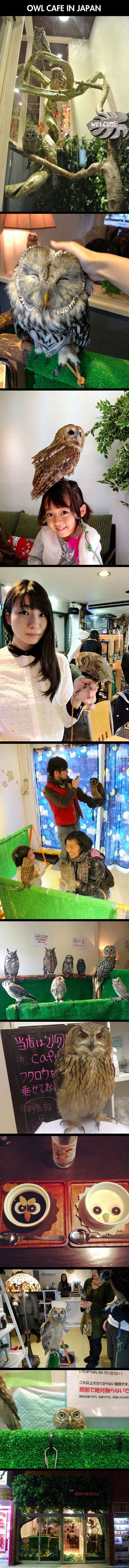 "Forget cat cafes. Or black cat cafes. Or penguin bars. Japan's latest novelty cafe is the ""fukurou cafe"" (フクロウカフェ), or the ""owl cafe."""
