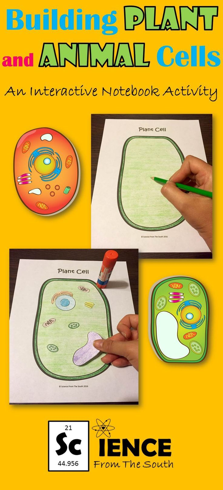 Building Plant and Animal Cells Activity for Middle and