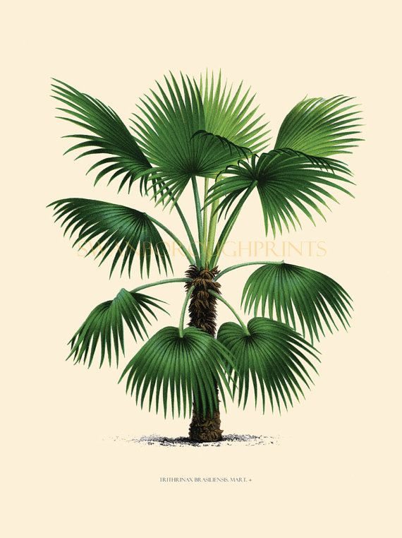 Coastal Living Decor Tropical Palm Trees.  Home Decor Vintage Palm Tree Illustration Art Print. Beach Style Bathroom Makeover Wall Art.