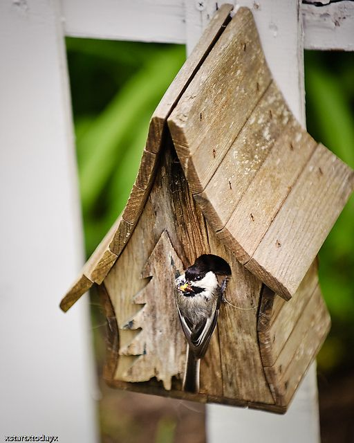 Chickadee+Bird+House+Plans | Our Chickadee Bird House - Houses Plans - Designs