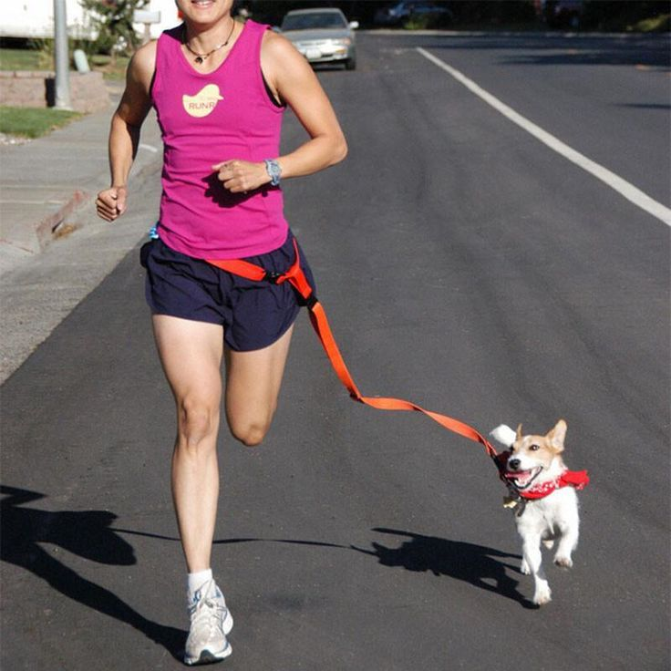Free up your hands when you jog with your dog. Get a Jogging Leash for the next time you go jogging.