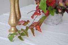 autumn coloured raspberry leaves