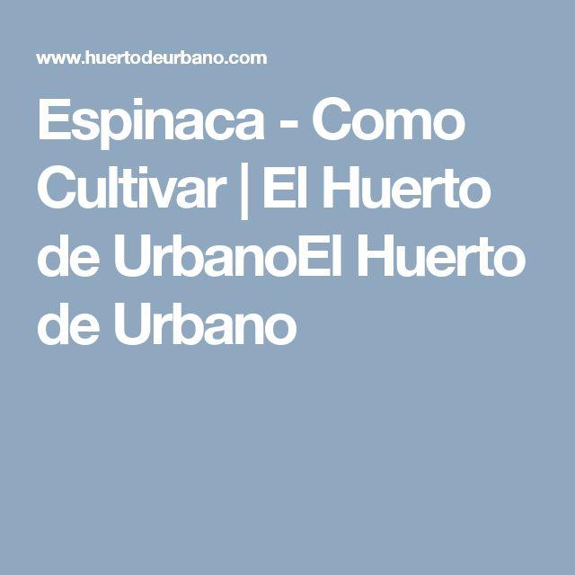 Espinaca - Como Cultivar | El Huerto de UrbanoEl Huerto de Urbano