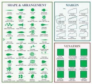 types of willow trees species washington natives  Yahoo
