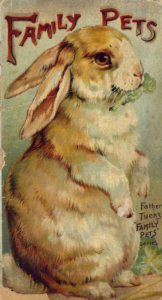 Old bunny graphic