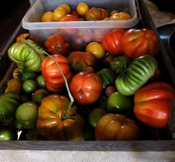 Groene tomatenchutney, rose tomatenchutney, gele, oranje en gestreepte tomatenchutney.