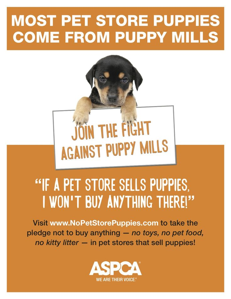 8 best A2 Public Service Poster ASPCA images on Pinterest - pet poster