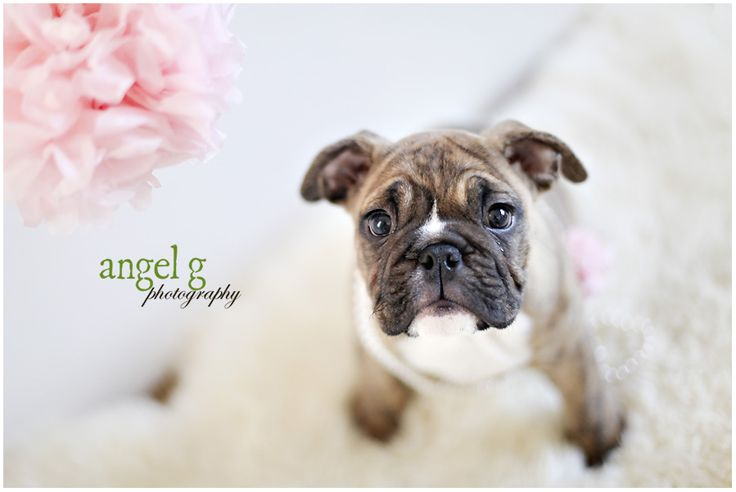 1326 best pet photography prop ideas �� puppy love images