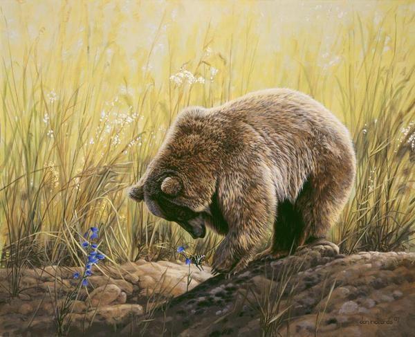 North American Wildlife Paintings   Wildlife Paintings by Dan Rickards