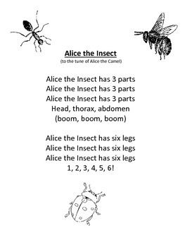 17 Best images about Insects Study on Pinterest ...