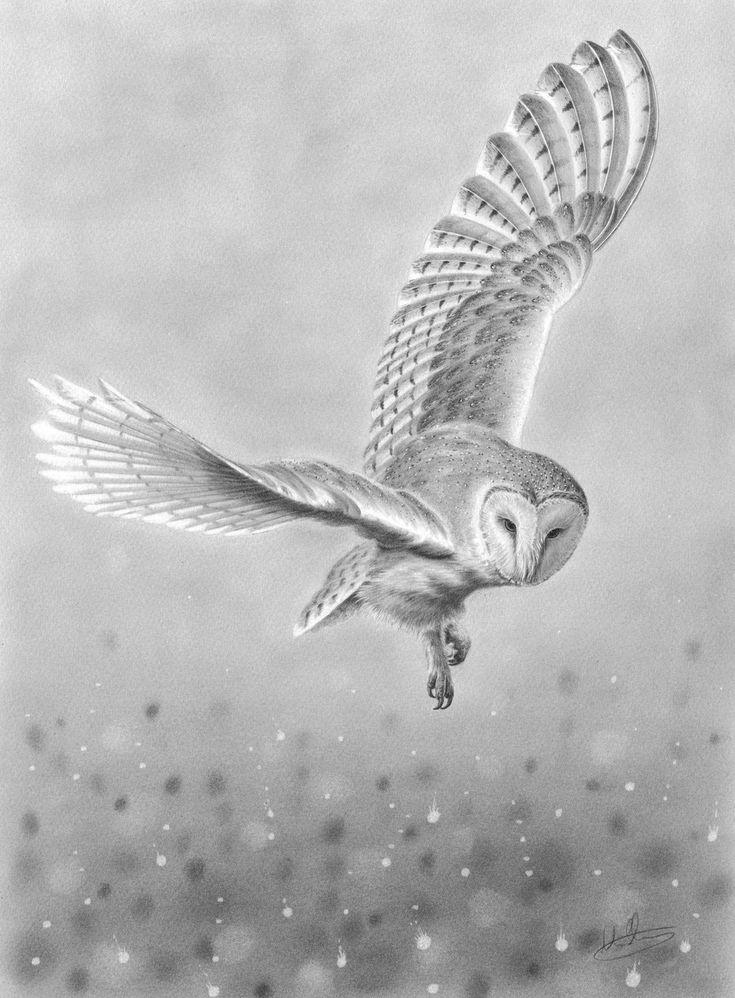Фото летящей белой совы в графике