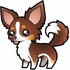 Chihuahua de pelo largo. Chihuahuas pelo largo características.Tipos de chihuahua. Razas de perro chihuahua. Clases de chihuahua. Chiguaguas caracteristicas. Tipos de chihuahueño. Perros chihuahua.