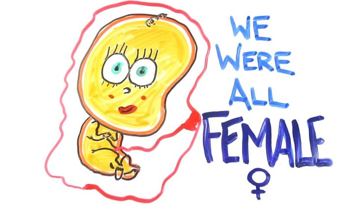We were all female Dear Gentlemen, science has a confession. You were once...a female - which helps to explain where your nipples came from. Watch and learn.  Written and created by Mitchell Moffit (twitter @mitchellmoffit) and Gregory Brown (twitter @whalewatchmeplz).  TWITTER: http://www.twitter.com/AsapSCIENCE FACEBOOK: http://www.facebook.com/AsapSCIENCE  Mitchell Moffit http://www.mitchellmoffit.com http://www.twitter.com/mitchellmoffit http://www.facebook.com/mitchellmoffit