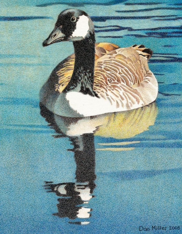 how to draw a canada goose easy