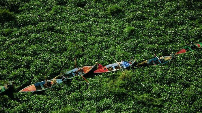 A primera vista, la foto parece que hay gente con remos barcos en un campo de arbustos.