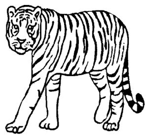 13 best Tiger Coloring Pages images on Pinterest Coloring pages