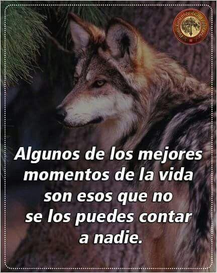 Pin De Carmin Ortiz En Lobos Pinterest Wolf Wolf Quotes Y Frases