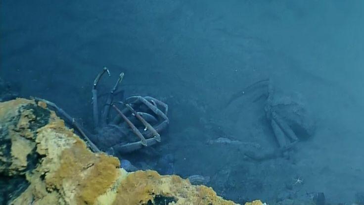 Des chercheurs ont découvert un bassin très particulier au fond du Golfe du Mexique, qui tue la plupart des êtres vivants qui s'y aventurent.