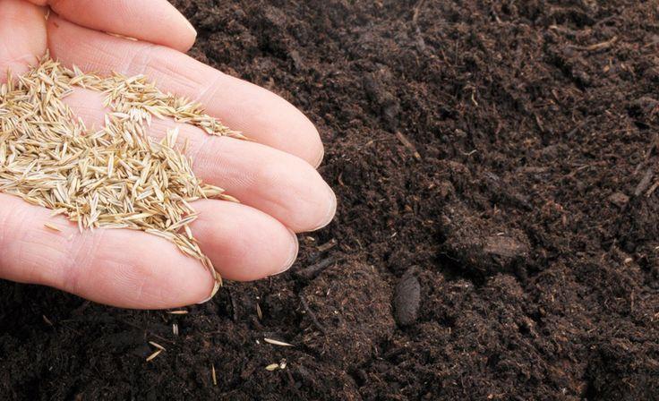 Rasen neu anlegen   Rasenpflege   selbst.de