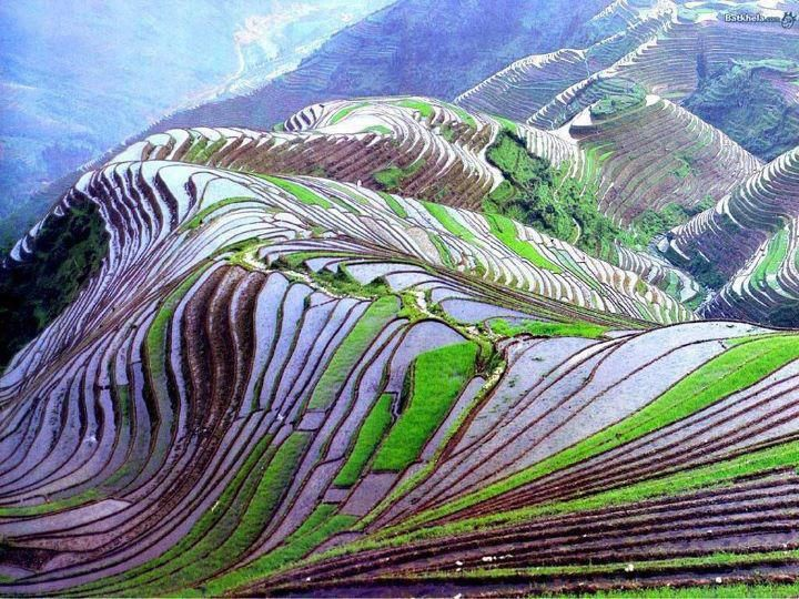 AMAZING RICE FIELDS OF CHINA :    This beautiful photo was shot in Yunnan, China as it is popular for its rice field terraces. This is not a Photoshopped image! This is a real shot. Just admire the beauty of Nature!